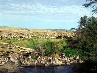 セレンゲティ国立公園の画像 p1_17