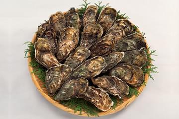 広島県の県の魚 カキ(牡蠣)